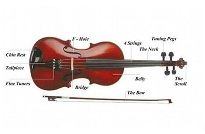 anatomical violin image